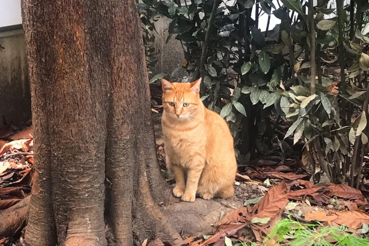 Era scappato ma dopo un annuncio su Libero il gatto è tornato a casa da solo <br> Storia buffa e incredibile del micio Giuliano