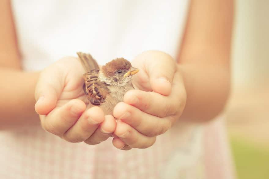 La gentilezza migliora vita e salute<br>E pure in politica non guasta