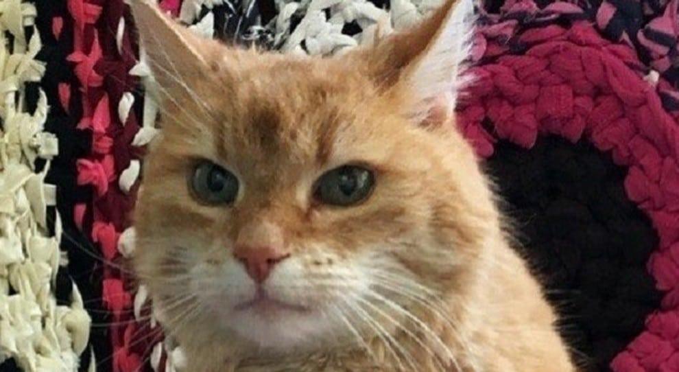 L'anziano gatto Ludwig torna a casa dopo 3 anni <br> I mici hanno ottima memoria ma la usano come gli conviene
