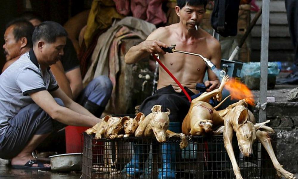 Cina, mostro di sensibilità
