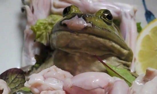 Crudeli tradizioni alimentari in giro per il mondo <br> Pure gli occidentali mangiano creature vive