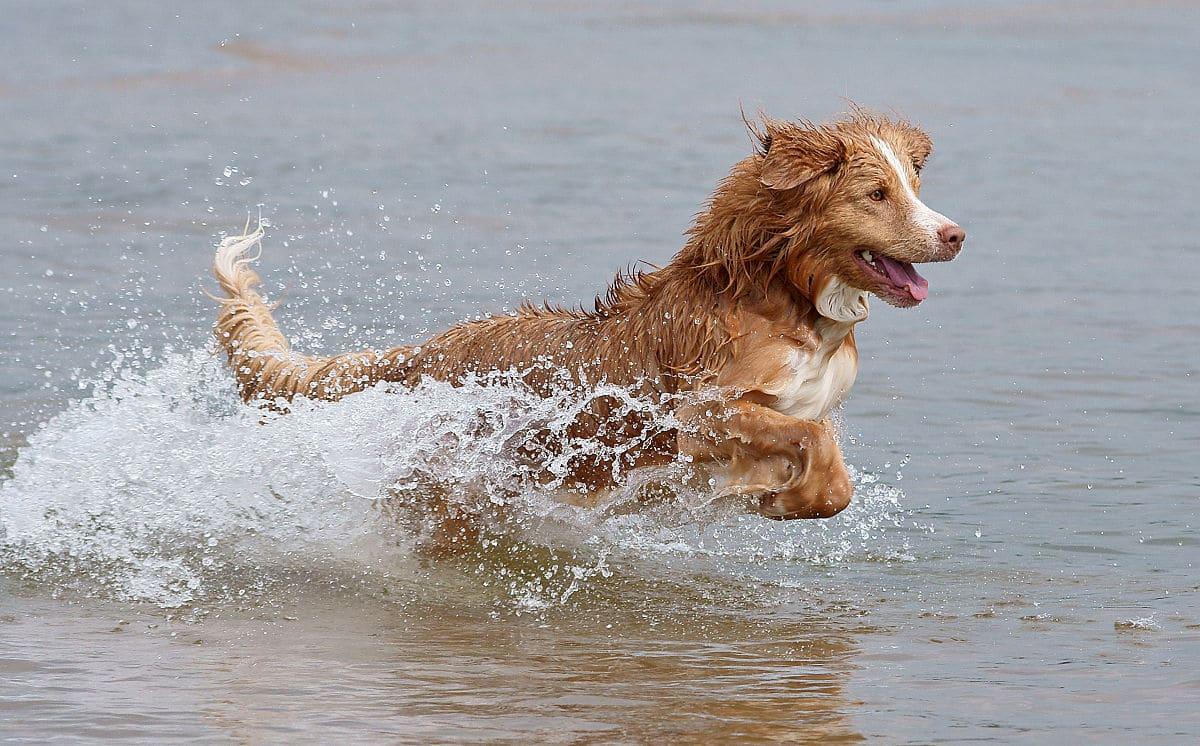 Sacrificio d'amore: si getta nel fiume per salvare fido e muore. <br> Quando l'uomo è il migliore amico del cane