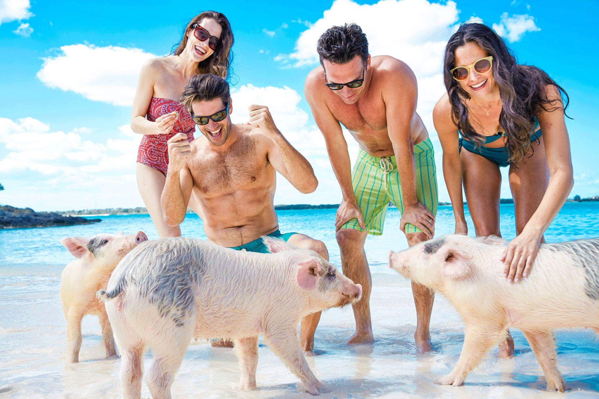 Alle Bahamas l'isola colonizzata dai suini.<br> Fanno il bagno con i turisti e si distendono al sole.<br> In Italia invece abbiamo la spiaggia dei gatti, ecco dove…