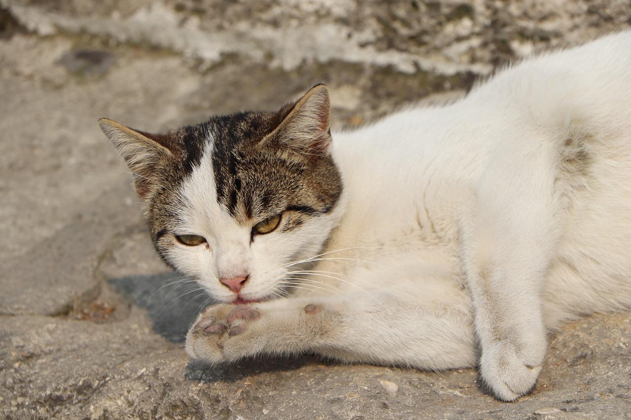 Affida i gatti ai figli minori e se ne va in vacanza, donna condannata per abbandono di animali