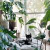 piante in appartamento