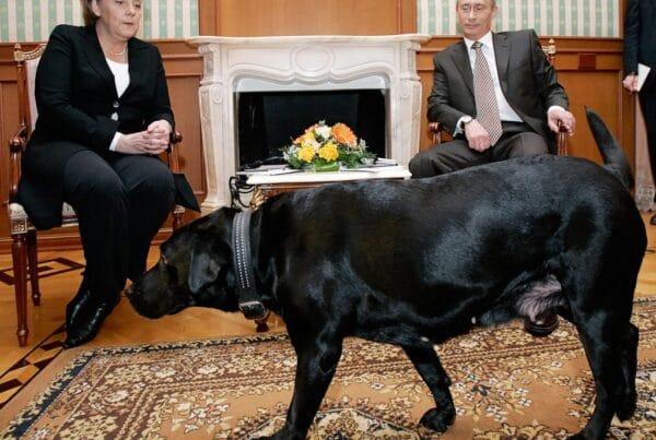 cani e politici