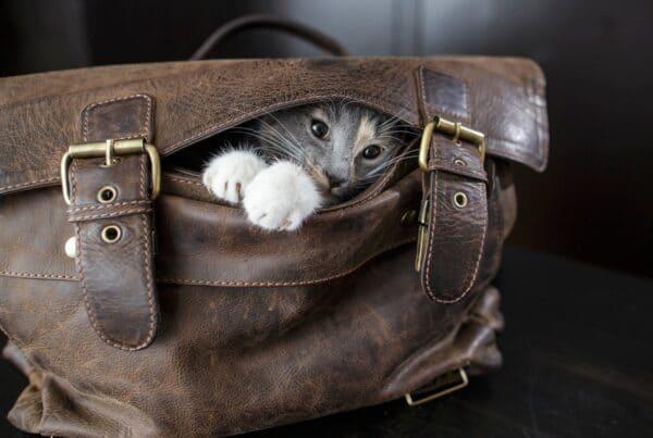 gatti che scappano di casa