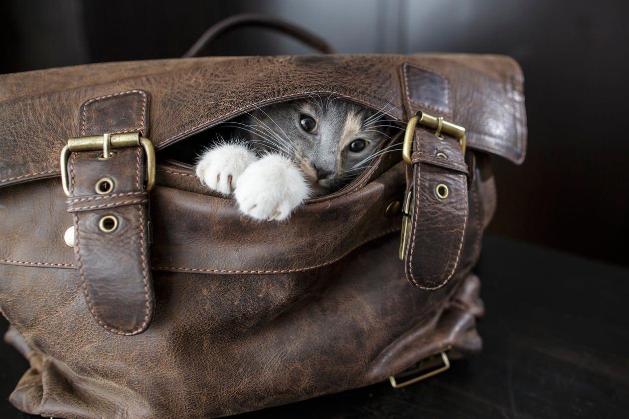 Dove diavolo vanno a cacciarsi i gatti quando si allontanano da casa?