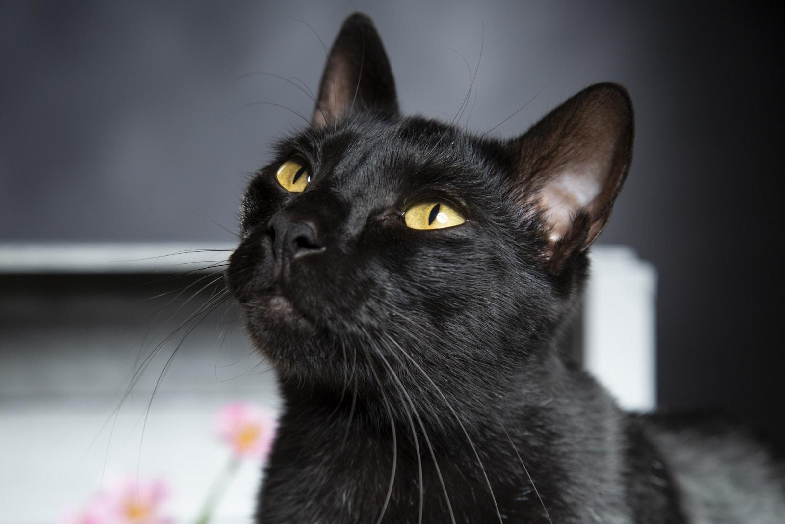 Gatto nero attraversa la strada, suora finisce contro una palazzina per evitare la sfiga.<br> Viva per miracolo