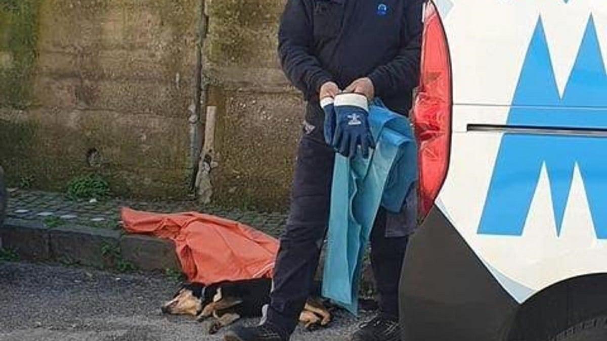 A Somma Vesuviana un uomo ha ucciso con tre fucilate il cane di Dio