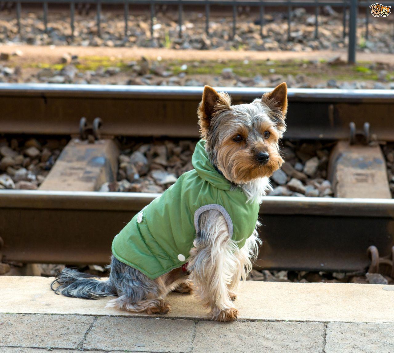 Turista spagnolo finisce sotto un treno per salvare il suo cane. Morti entrambi